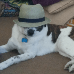 Dog wearing beach hat.